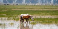El Defensor del Pueblo Andaluz alerta sobre los riesgos que afectan a la conservación de Doñana