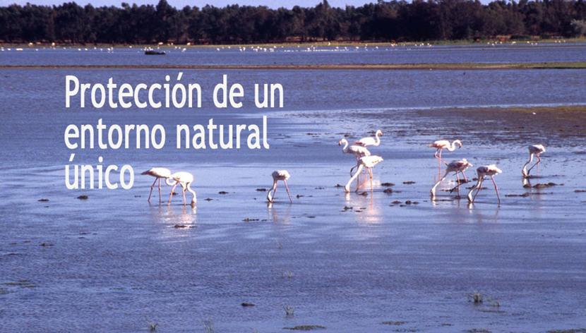 19.45 h: Reunión con una delegación de la Eurocámara sobre Doñana